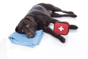 Labrador mit Erste Hilfe Tschchen
